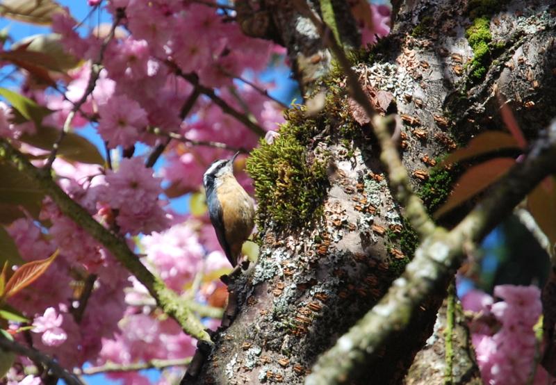 F&O silent spring bird
