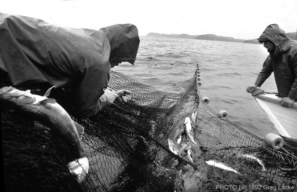 Fishermen haul in their cod traps near Trouty, Trinity Bay, Newfoundland. Photo by Greg Locke © 1992