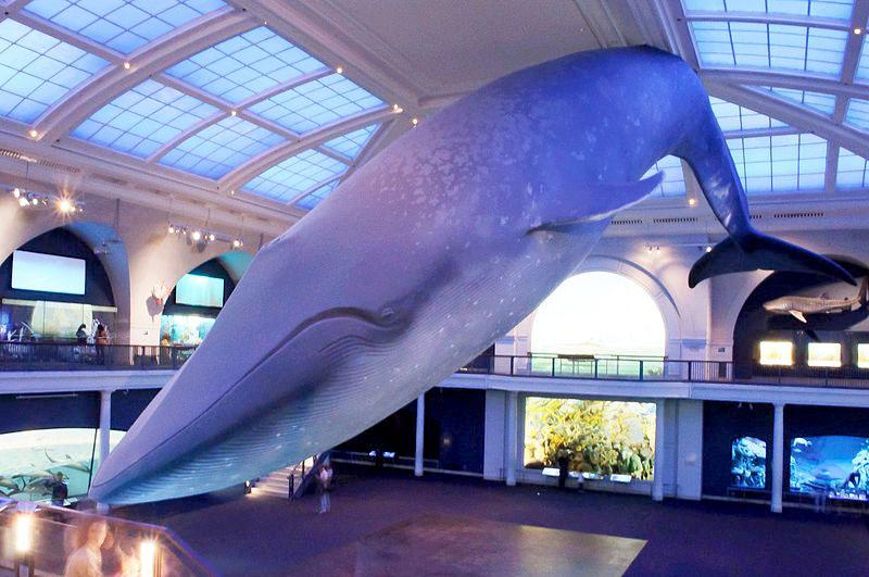 whalestatue