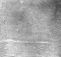 Fingerprint_Whorl