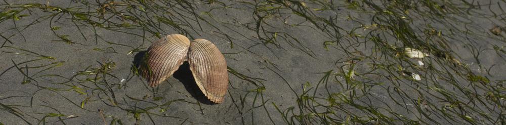 clam 2