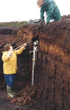 Digging for Alaskan ash in an Irish bog. Gill Plunkett, Author provided