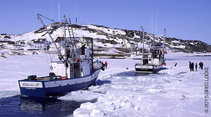 Fishermen making their way through the ice in Twillingate, Newfoundland on the way to hunt seals. Photo by Greg Locke © 2015
