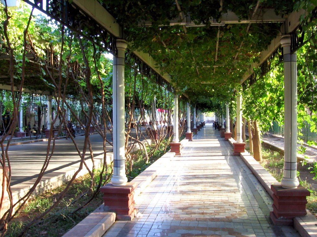Sidewalks on a street in Turpan, western China, are shaded by pergolas with grape vines. Creative Commons via Wikipedia