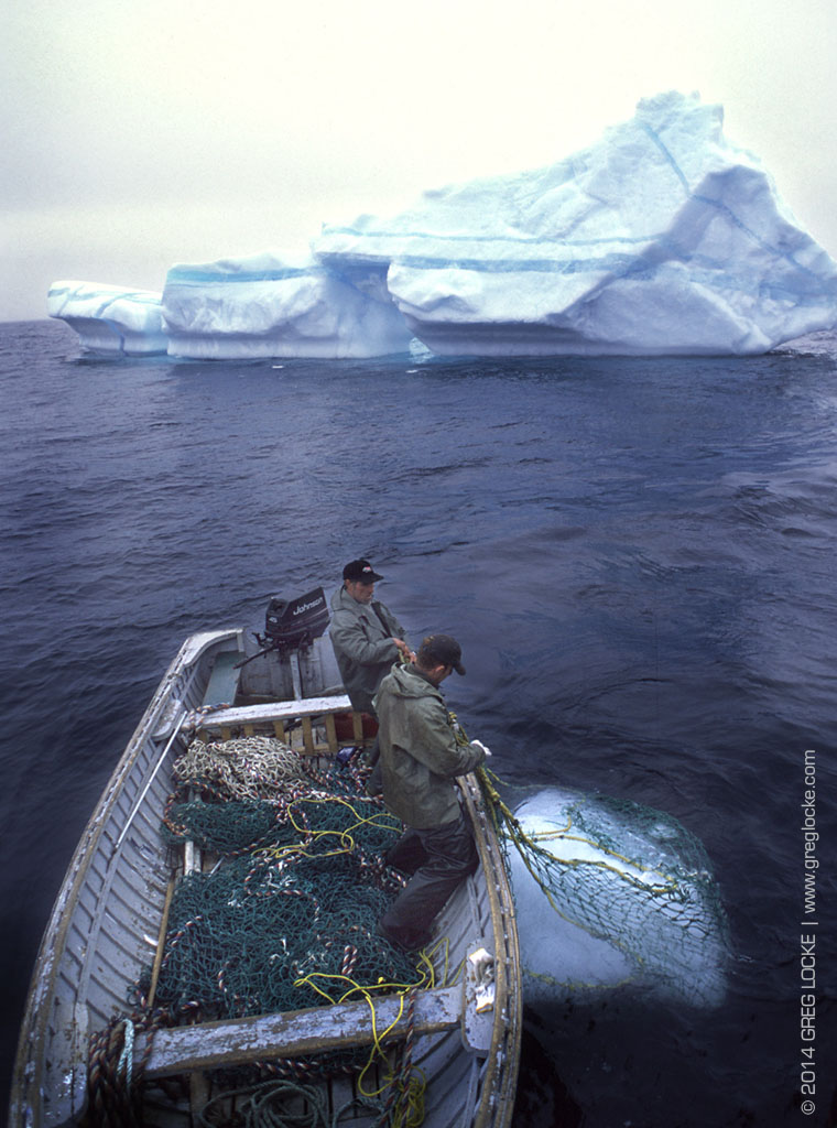 This myth of a broken humanity neuters our potential and alienates us from the rest of the natural community. Above,  Newfoundlanders harvest ice bergs for water to make vodka and beer, off Canada's Atlantic coast. Photo by Greg Locke © 2015