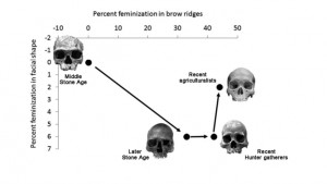 Human skulls showing feminization in the late Stone Age. Cieri et al