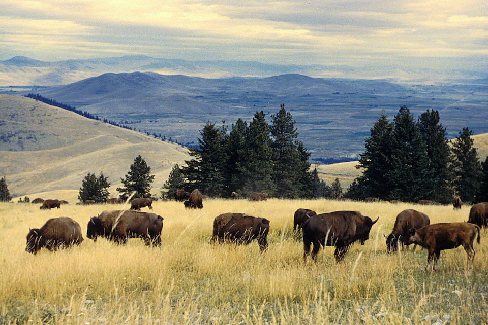 National Bison Range. U.S. government photo