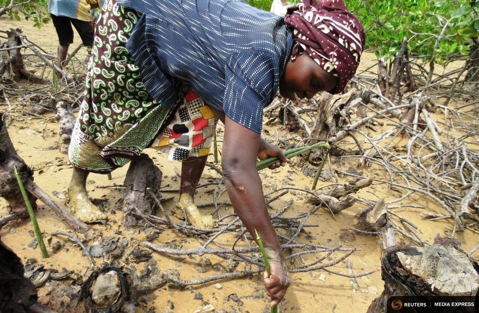 Kibibi Mramba replants mangroves along a creek in the Kenyan coastal town of Kilifi. TRF/Sophie Mbugua