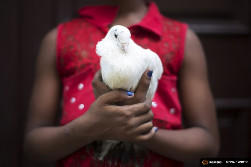 Gilian Caballero, 8, holds a pigeon for sale used for Santeria rituals in downtown Havana, August 4, 2015. Santeria adherents can only hope the upcoming visit from Pope Francis will somehow nudge the Church toward recognizing the millions of Cubans who identify with both religious traditions. Picture taken on August 4, 2015. REUTERS/Alexandre Meneghini       TPX IMAGES OF THE DAY