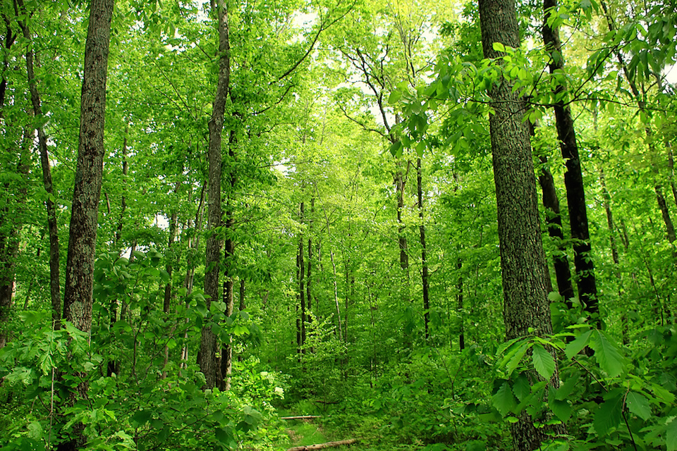 Dense deciduous forest, Delaware State Forest. Photo by Nicholas A. Tonelli/FLICKR