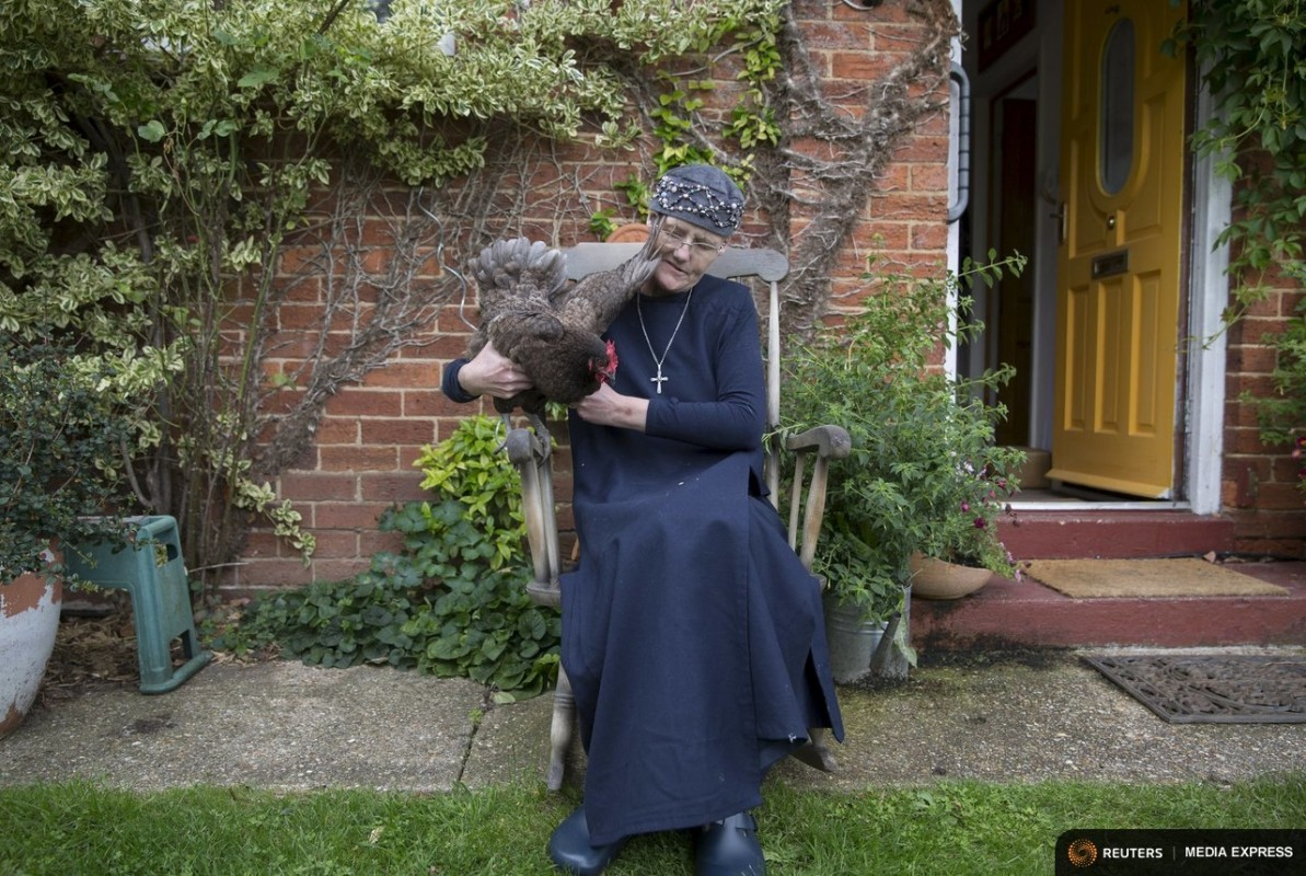 "Sister Rachel Denton sits with her chicken in the garden of St Cuthbert's Hermitage in Lincolnshire, north east Britain August 24, 2015. Denton, a Catholic hermit, rises early to tend to her vegetable garden, feed her cats and pray. But the former Carmelite nun, who in 2006 pledged to live the rest of her life in solitude, has another chore - to update her Twitter account and check Facebook. ""The myth you often face as a hermit is that you should have a beard and live in a cave. None of which is me,"" says the ex-teacher. For the modern-day hermit, she says social media is vital: ""tweets are rare, but precious,"" she writes on her Twitter profile. The internet also allows Denton to shop online and communicate with friends. ""I am a hermit but I am also human."" A diagnosis of cancer earlier this year reaffirmed Denton's wish to carry on a life of solitude, prayer and contemplation. REUTERS/Neil Hall"