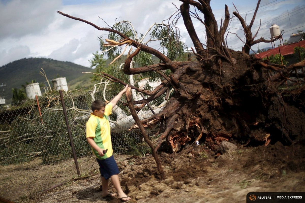 A boy looks at a tree felled by wind after the passing of Hurricane Patricia in La Union de Tula, Mexico October 24, 2015. REUTERS/Edgard Garrido