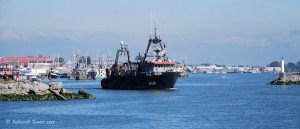 Fishers leave Steveston, B.C. © Deborah Jones 2013