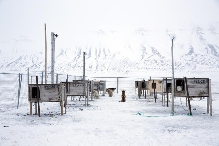 "Dogs, some that are family pets and others that are used for dog sledges, are seen waiting in their yard outside the settlement in Longyerbyean, Svalbard, Norway, October 22, 2015. A Norwegian chain of islands just 1,200 km (750 miles) from the North Pole is trying to promote new technologies, tourism and scientific research in a shift from high-polluting coal mining that has been a backbone of the remote economy for decades. Norway suspended most coal mining on the Svalbard archipelago last year because of the high costs, and is looking for alternative jobs for about 2,200 inhabitants on islands where polar bears roam. Part of the answer may be to boost science: in Ny-Alesund, the world's most northerly permanent non-military settlement, scientists from 11 nations including Norway, Germany, France, Britain, India and South Korea study issues such as climate change. The presence of Norway, a NATO member, also gives the alliance a strategic foothold in the far north, of increasing importance after neighbouring Russia annexed Ukraine's Crimea region in 2014.    REUTERS/Anna FilipovaPICTURE 11 OF 19 - SEARCH ""SVALBARD FILIPOVA"" FOR ALL IMAGES"