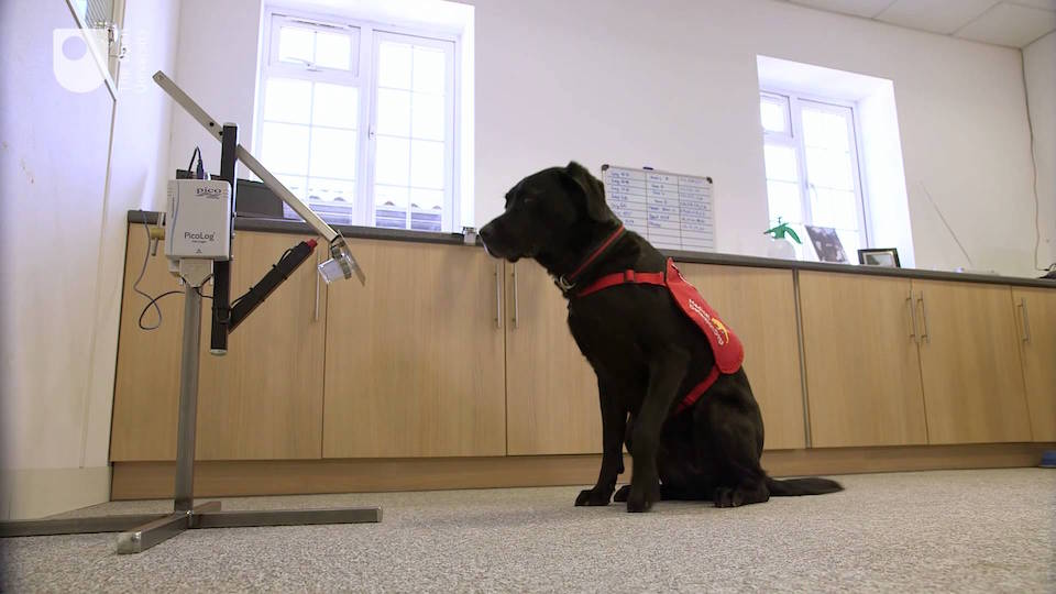 A dog training on a new device to help dogs sniff cancer. Open University/YouTube