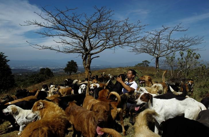 Alvaro Saumet plays with stray dogs at Territorio de Zaguates or 'Land of the Strays' dog sanctuary in Carrizal de Alajuela, Costa Rica, April 22, 2016. In a lush, sprawling corner of Costa Rica, hundreds of dogs roam freely on a hillside - among the luckiest strays on earth. Fed, groomed and cared for by vets, more than 750 dogs rescued from the streets of Costa Rica inhabit Territorio de Zaguates or 'Land of the Strays', a pooch paradise. The 152-hectare sanctuary in the centre of the Central American country is funded by donations. Around 8,000 dogs have passed through the refuge. There are more than a million stray dogs in Costa Rica, where the government outlawed putting animals down in 2003. REUTERS/Juan Carlos Ulate