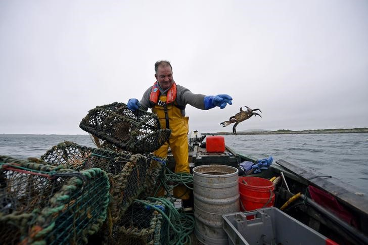 Johnny Cloherty from Mweenish Island who catches lobsters and harvests seaweed, takes his catch out of a lobster pot on his currach boat off the coast of Carna in Galway, Ireland, July 15, 2016. REUTERS/Clodagh