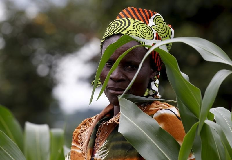 More Food No Answer to Africa's Hunger. Above, a Malawian subsistence farmer surveys her maize fields in Dowa near the capital Lilongwe, February 3, 2016. REUTERS/Mike Hutchings