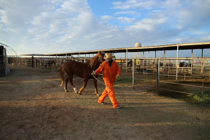 "An inmate trains a wild horse as part of the Wild Horse Inmate Program (WHIP) at Florence State Prison in Florence, Arizona, U.S., December 2, 2016. REUTERS/Mike Blake       SEARCH ""WILD HORSE"" FOR THIS STORY. SEARCH ""WIDER IMAGE"" FOR ALL STORIES."