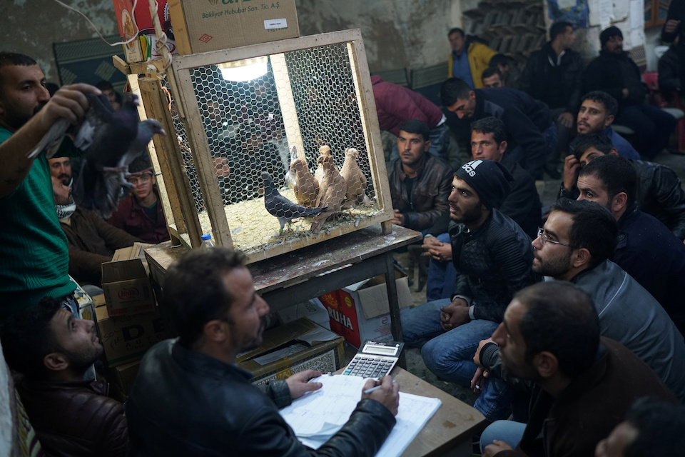 """Auctioneer Kadir Sakizci (L), 28, conducts a sale at a pigeon auction in Sanliurfa, Turkey, December 10, 2016. REUTERS/Umit Bektas            SEARCH """"PIGEONS AUCTION"""" FOR THIS STORY. SEARCH """"WIDER IMAGE"""" FOR ALL STORIES."""