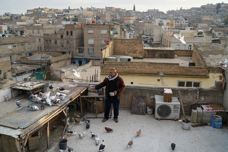 "Resit Guzel, 55, feeds his pigeons on top of a roof in Sanliurfa, Turkey, December 10, 2016. REUTERS/Umit Bektas           SEARCH ""PIGEONS AUCTION"" FOR THIS STORY. SEARCH ""WIDER IMAGE"" FOR ALL STORIES."