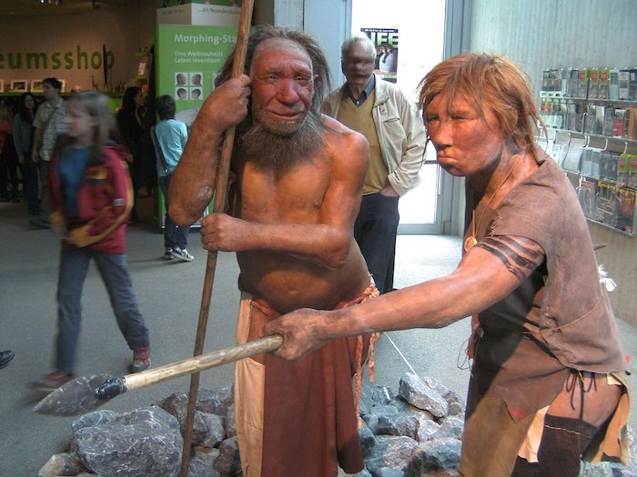 Reconstruction of a Homo neanderthalensis man and woman, in the Neanderthal Museum, Mettmann, Germany. Photo credit: UNiesert - Sariling gawa/Wikipedia