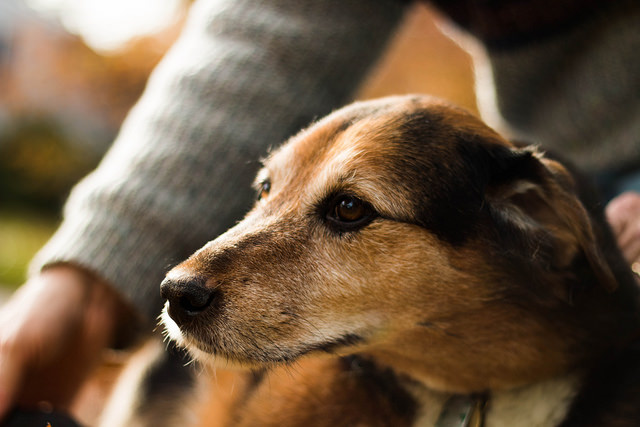 A dog is human's best friend. Photo by Sasha the Okay Photographer/Creative/Commons/Flickr