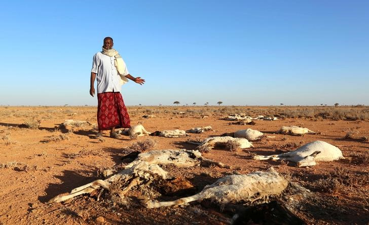 An internally displaced man looks at the carcasses of his goats and sheep in the outskirts of Dahar town of Puntland state in northeastern Somalia, December 15, 2016. REUTERS/Feisal Omar - RTX2V8OJ