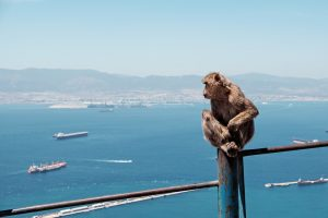 Gibraltar -- The Rock -- has been British territory since it was ceded by Spain in 1713, but it is now emerging as an issue as Britain starts the negotiations with Brussels to leave the European Union.An ape on Gibraltar. Photo by Simone A. Bertinotti via Flickr, Creative Commons