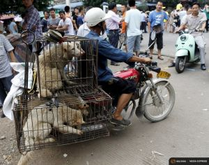 2015-06-25T163909Z_1_LYNXMPEB5O0VK_RTROPTP_4_CHINA-DOG-MEAT.JPG