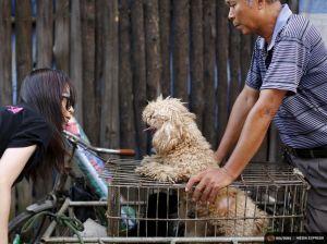 2015-06-25T163909Z_1_LYNXMPEB5O0VL_RTROPTP_4_CHINA-DOG-MEAT.JPG