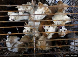 2015-06-25T163909Z_1_LYNXMPEB5O0VT_RTROPTP_4_CHINA-DOG-MEAT.JPG