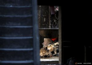 2015-06-25T163909Z_1_LYNXMPEB5O0VV_RTROPTP_4_CHINA-DOG-MEAT.JPG