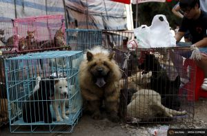 2015-06-25T163909Z_1_LYNXMPEB5O0W1_RTROPTP_4_CHINA-DOG-MEAT.JPG