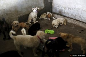 2015-06-25T163909Z_1_LYNXMPEB5O0W2_RTROPTP_4_CHINA-DOG-MEAT.JPG