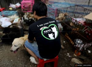 2015-06-25T163909Z_1_LYNXMPEB5O0W6_RTROPTP_4_CHINA-DOG-MEAT.JPG